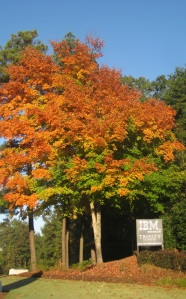 What do we love about Atlanta? The weather is great.  Here's a colorful autumn tree on Northside Parkway at the entrance of IBM & The Trinity School